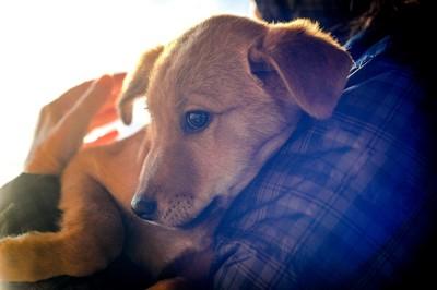飼い主に抱かれる茶色い犬