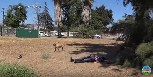 地面に寝そべる人と横に立つ犬