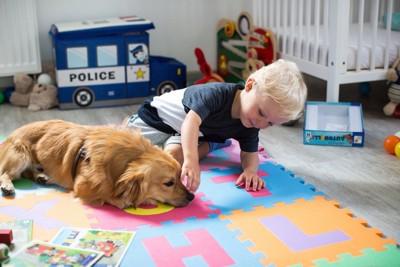 犬の鼻を触ろうとする子供