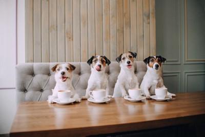 テーブルにカップと四頭の犬