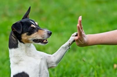 ハイタッチする白×黒の犬
