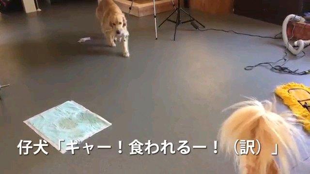 ギャー~字幕