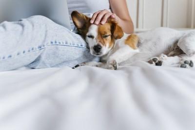 足に寄りかかって休む犬