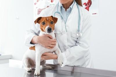 獣医師と診察台の上の犬