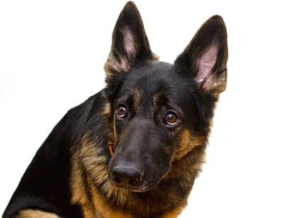 怯えたような表情の犬