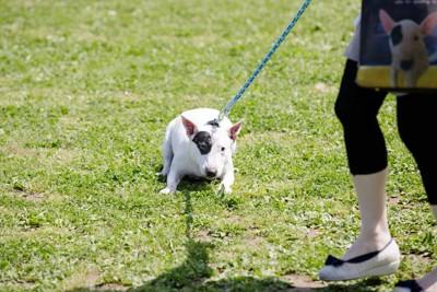 足を踏ん張る犬
