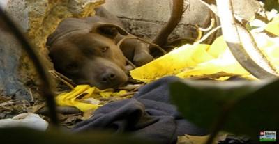 物陰に寝そべる犬