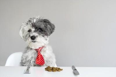 赤いネクタイをした犬、テーブルの上にフード