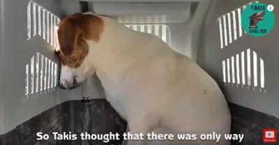 キャリーケースで縮こまる犬