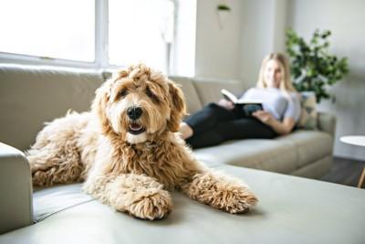 ソファーで本を読む女性とくつろいでいる犬