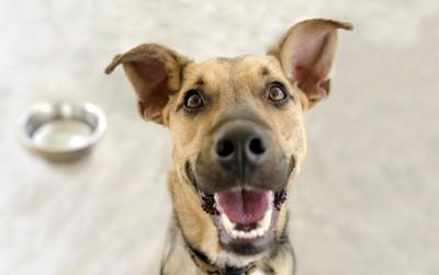 うれしそうな顔の犬とフードボウル