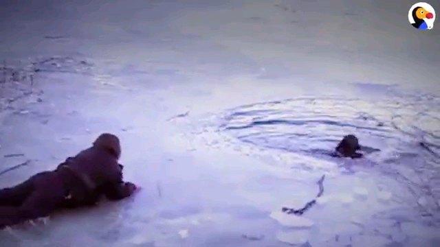 湖に落ちた犬とほふく前進する人