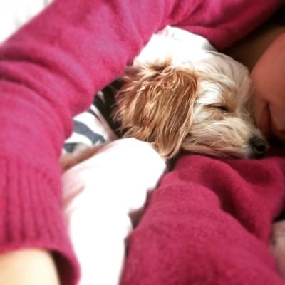 安心して眠る愛犬