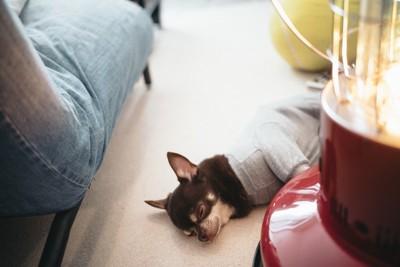 ストーブの近くで眠る犬