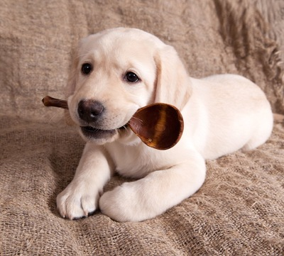 スプーンをくわえる犬