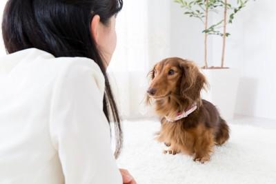 犬を観察する飼い主