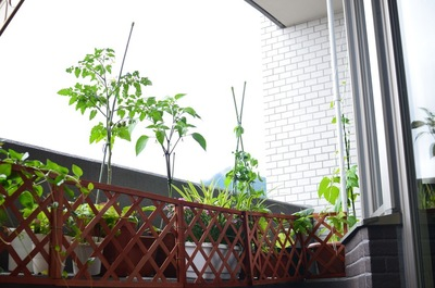 植物があるベランダ