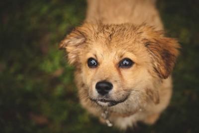 汚れている犬
