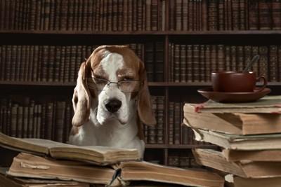 勉強する老犬