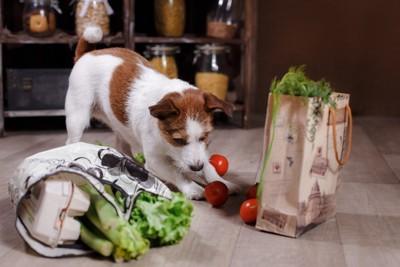 食べ物をいたずらしている犬