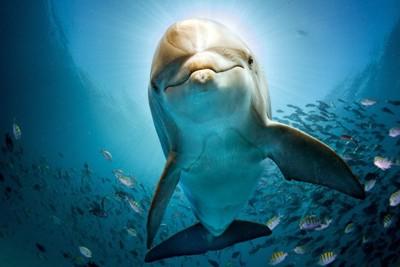 水中を泳ぐイルカ