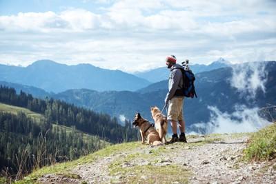 ハイキングを楽しむ男性と2頭の犬