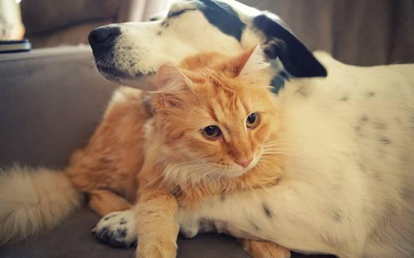 犬と猫が抱き合っている写真