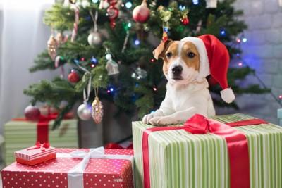 大きなプレゼントの箱に手を置く犬