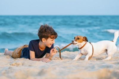 男の子と砂浜で遊ぶ犬