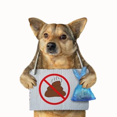 ゴミ袋とウンチの看板を持つ犬