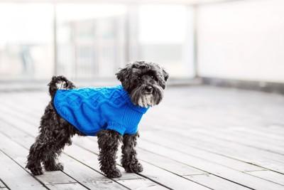 水色のニット服を着る犬