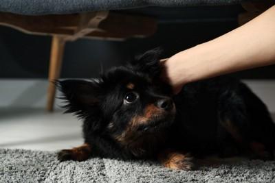 掴まれて怯える黒い犬