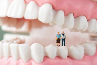 高齢者と歯の模型
