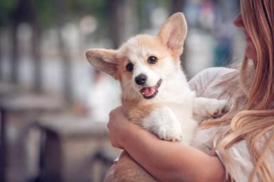 女性に抱っこされるコーギーの子犬