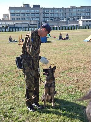 犬のトレーニング風景