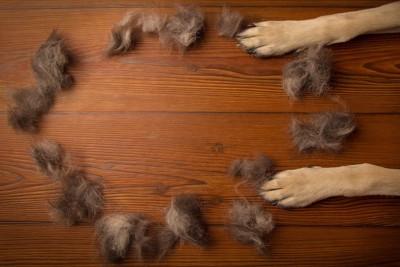 たくさんの抜け毛と犬の前足
