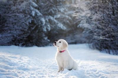 雪の中の子犬
