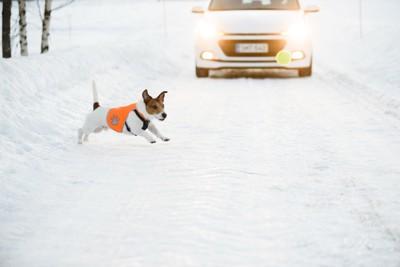 走っている車の前に飛び出している犬