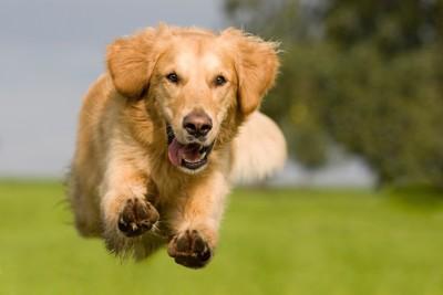 草原の中を猛ダッシュする犬