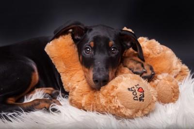 テディーベアと犬