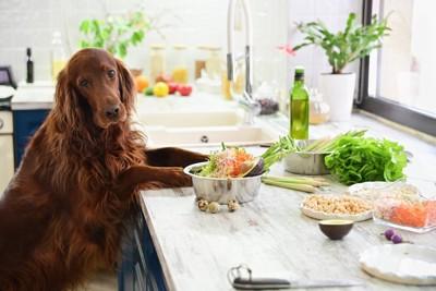 並んだ食材と犬