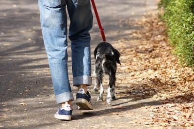 歩く犬と人の後ろ姿
