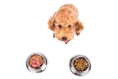 2つのフードボゥルと犬
