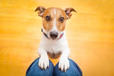 人の膝に手を乗せる犬