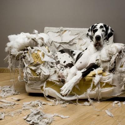 破壊された椅子と犬