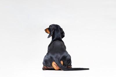 背中を向ける犬