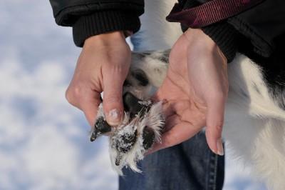 犬の肉球を点検する人の手
