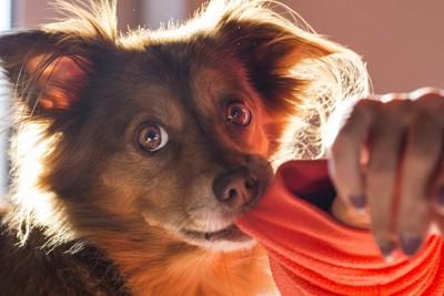 袖を噛む犬