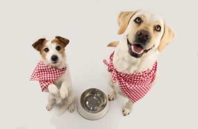 ごはんを待つ二頭の犬、赤いチェックのバンダナ