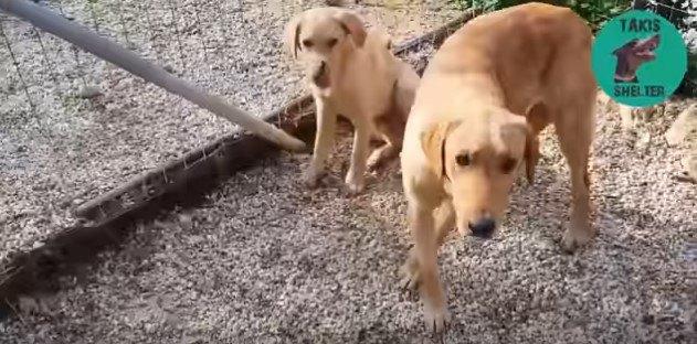 怖がる母子